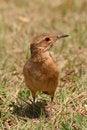 Free Curious Bird Stock Photo - 3345070