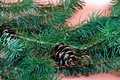 Free Christmas Decoration-pine Tree Stock Images - 3345344