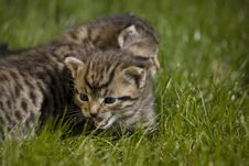 Free Kitty Stock Photography - 3340082
