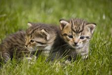 Free Kitty Stock Photography - 3340162