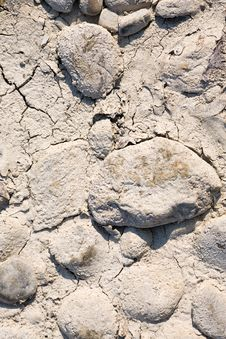 Free Desiccated Stock Photography - 3340442