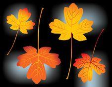 Free Autumn Leaves Stock Photo - 3340510