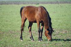 Free Brown Horse Stock Photos - 3341083