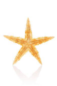 Free Philippine Starfish Royalty Free Stock Photos - 3341388