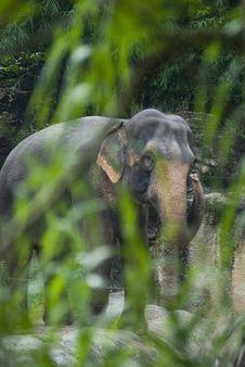 Free Elephant Royalty Free Stock Photography - 3341887