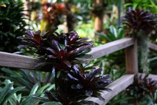 Free Botanical Garden Stock Image - 3341961