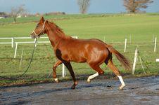 Free Horse Stock Image - 3342371