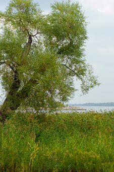 Free Tilted Tree On The Lakeshore Royalty Free Stock Images - 3342459