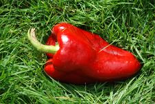 Free Red Paprika On The Grass Stock Image - 3342681