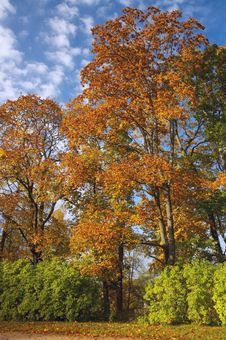 Free Autumn Maples In Park Royalty Free Stock Images - 3343689