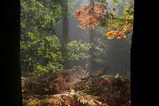 Free Dutch Autumn Forest Stock Photos - 3343763