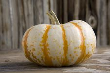 Free White Pumkin Royalty Free Stock Photography - 3343997
