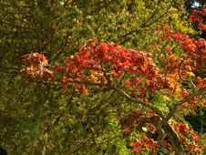 Free Autumn Colors Stock Photography - 3345302