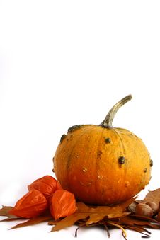 Free Pumpkins And Gourds On Isolate Stock Photo - 3346700