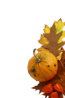 Free Pumpkins And Gourds On Isolate Royalty Free Stock Image - 3346716
