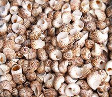 Free Seashells Stock Photos - 3347203