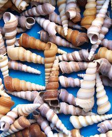 Free Seashells Stock Photography - 3347222