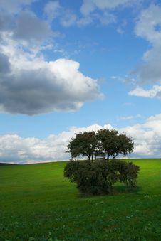Free Tree And Mackerel Sky Stock Image - 3348131