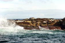 Seal Island With Wave Splash Royalty Free Stock Image