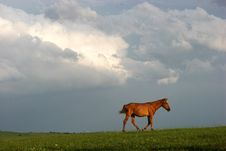 Free Horse Under The Sky Stock Images - 3348494