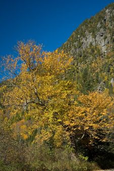 Free Fallen Fall Tree Royalty Free Stock Images - 3348799