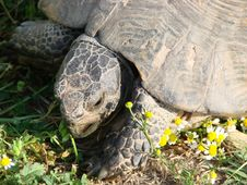 Free Tortoise Royalty Free Stock Images - 3349149