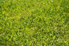Free Lush Green Backlit Grass Stock Images - 3349754