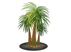 Free Palm Trees Stock Photos - 33403903