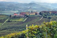 Free Panorama Of Vineyards Stock Images - 33419724
