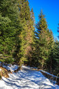 Free Snow-covered Pathway To Coniferous Forest On Winter Day Royalty Free Stock Photo - 33424305