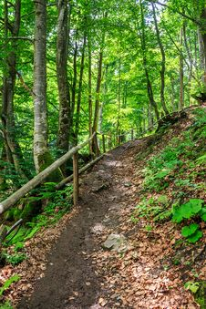 Free Pathway In A Forest Go Up Stock Image - 33423171