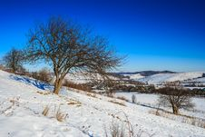 Free Bare Trees On Hillside Under The Winter Blue Sky Royalty Free Stock Image - 33424186