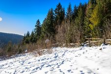 Snow-covered Pine Forest On The Hillside In Winter Stock Photos