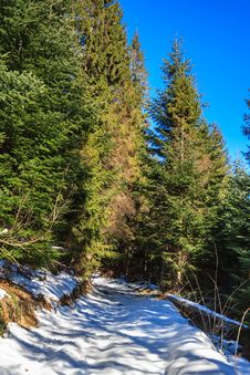 Snow-covered Pathway To Coniferous Forest On Winter Day Royalty Free Stock Photo