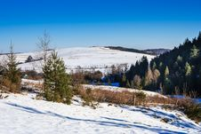 Snow-covered Pine Forest On The Hillside In Winter Stock Image