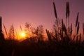 Free Silhouette Plant Royalty Free Stock Photos - 33455678
