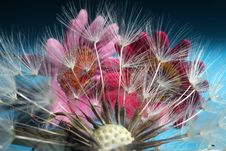 Free Dandelion And Flowers Royalty Free Stock Images - 33456469