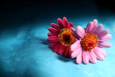 Free Flowers Stock Image - 33456841