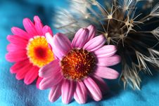 Free Dandelion And Flowers Stock Photography - 33457262