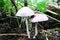 Free Mushrooms Stock Photos - 33458673