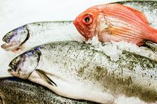 Free Fresh Fish For Sale Stock Photography - 33463892
