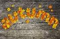 Free Autumn Stock Photography - 33470852