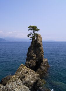Free Pine Tree Rock In Italy Stock Images - 33476324