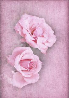 Pink Roses On A Textured Pink Background
