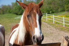 Free Horse Stock Photography - 33488322
