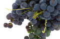 Free Bunch Grape Stock Photos - 33493853