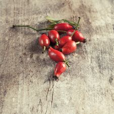 Free Rose Hips Stock Photography - 33497702
