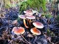 Free Mushrooms Stock Image - 3355951