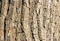 Free Bark Of Oak Close-up Royalty Free Stock Photo - 3356795