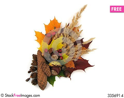Leaves and fruits of autumn Stock Photo